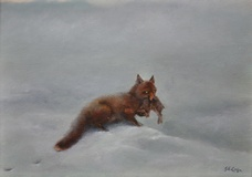 Fox with Leveret amongst snow fields